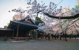 桜の起源とソメイヨシノ
