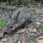 【千葉県ワイルドライフ】野生の小動物とくにノウサギがやばカワw