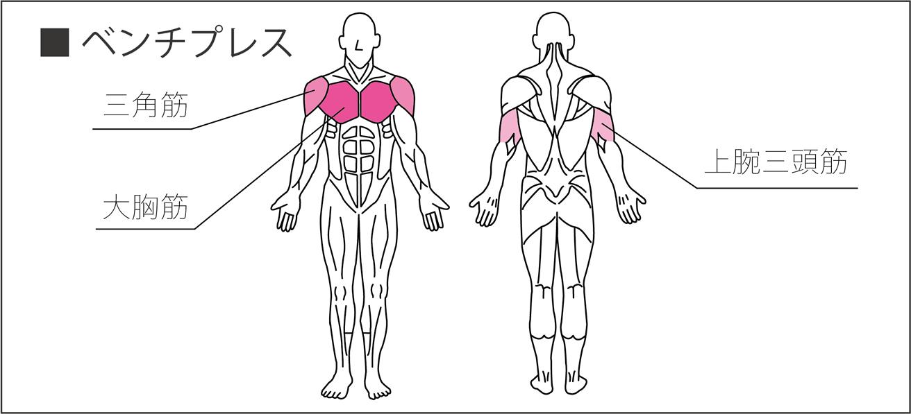 ベンチプレスで使われる筋肉