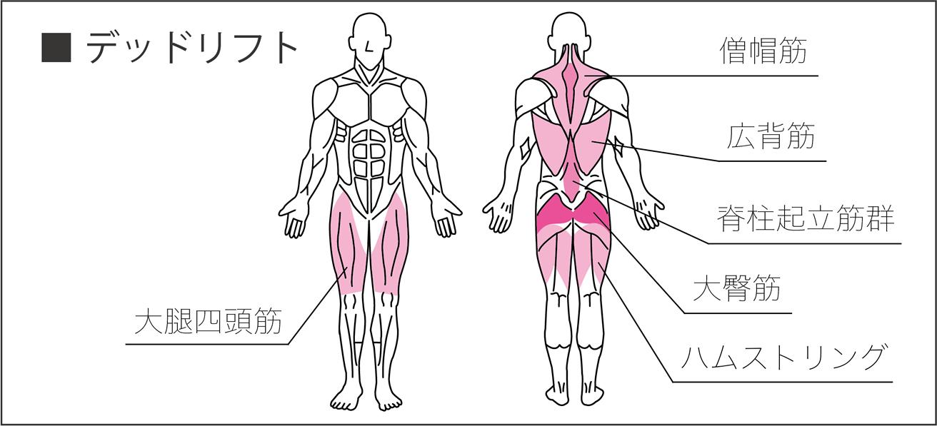デッドリフトで使われる筋肉