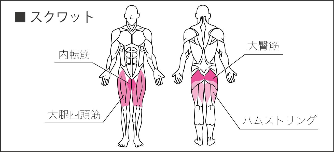 スクワットで使われる筋肉